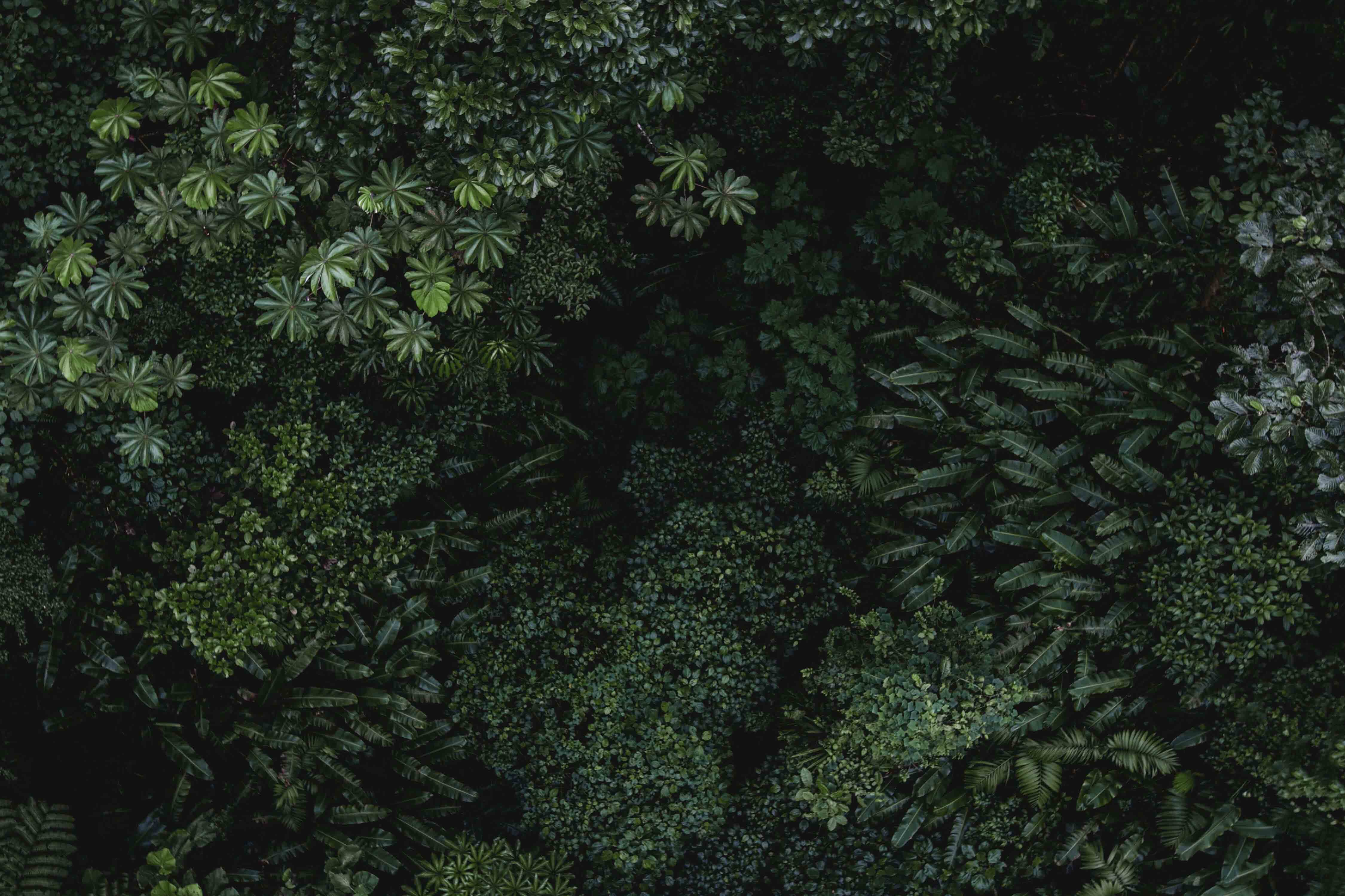 lisa brandao naturopathe tarbes slider nature foret