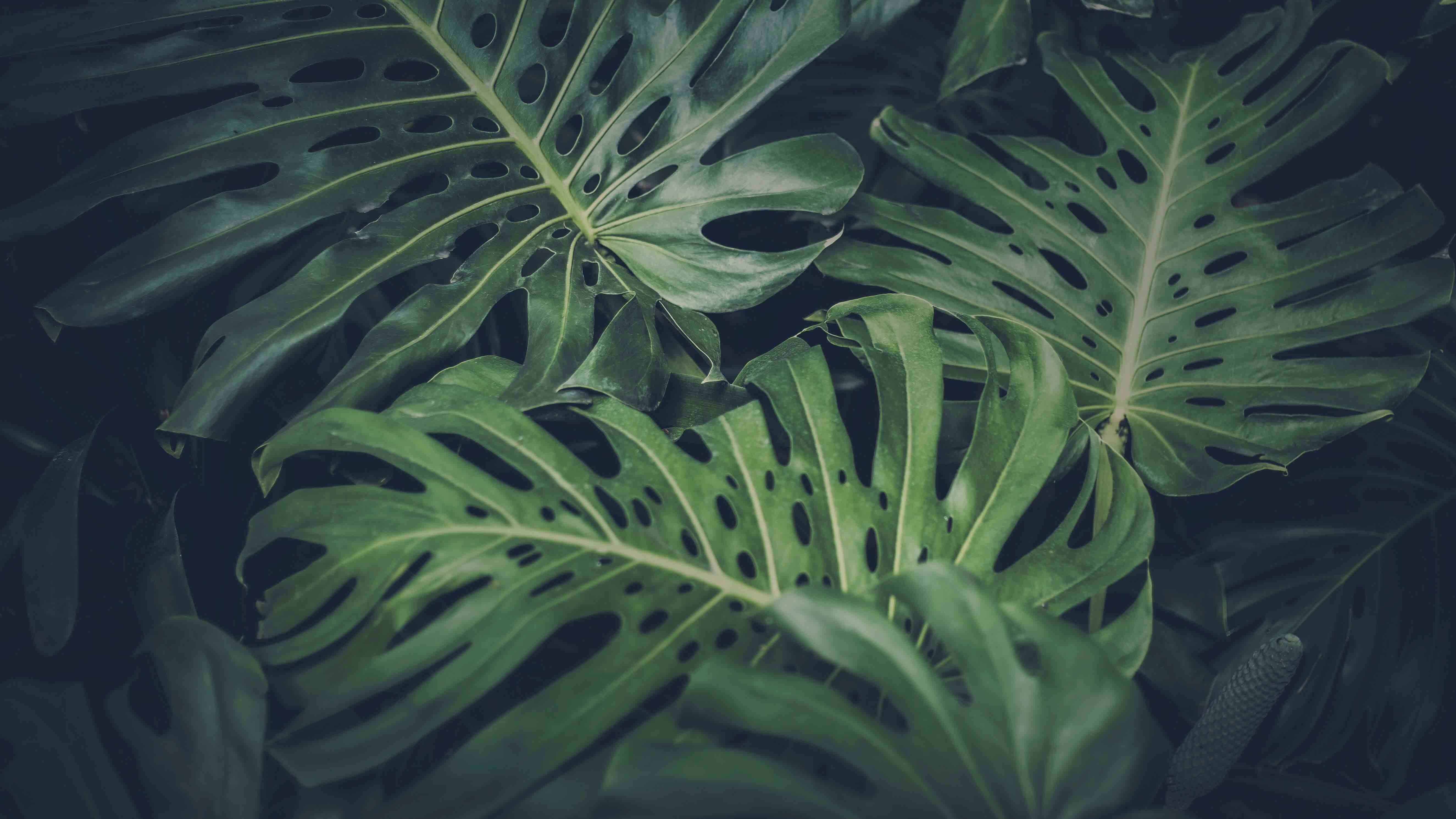 lisa brandao naturopathe tarbes slider nature foret feuille humide